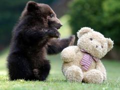bear_teddy_bear
